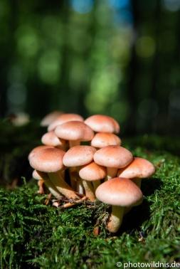 Unbekannter Pilz auf Moos