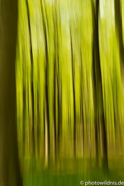 Wischer im Frühlingswald