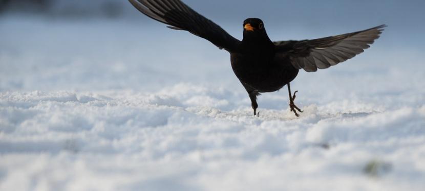 Winterzeit – Gartenvögelzeit